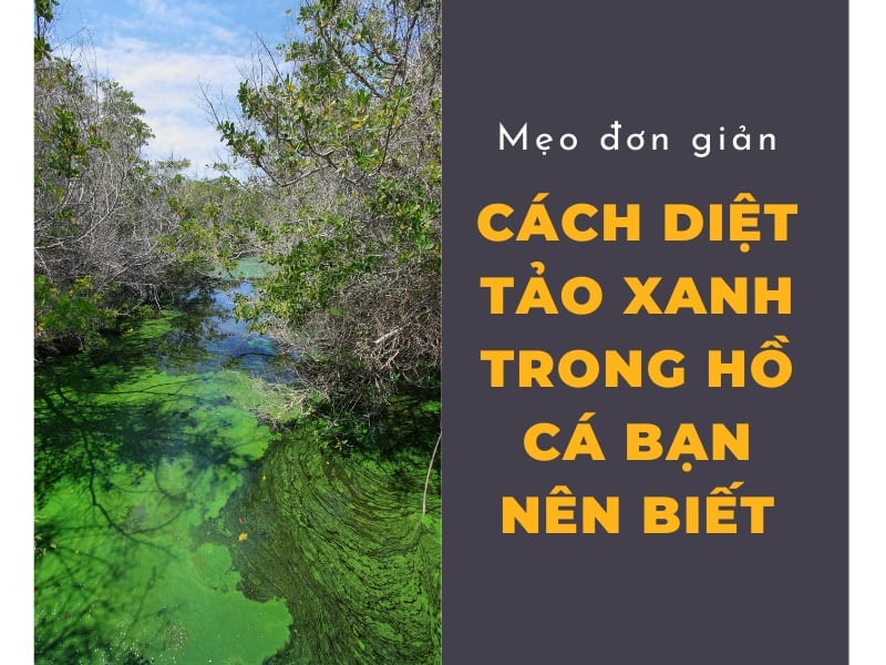 cach-diet-tao-xanh-trong-ho-ca