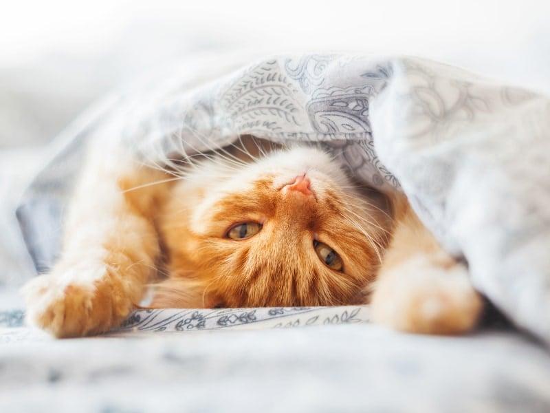 cách trị mèo ị bậy