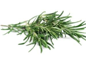 tác hại của cây hương thảo