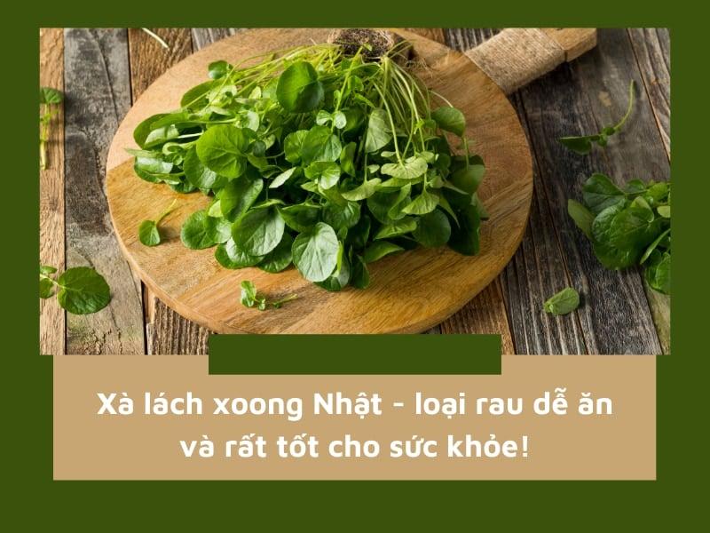 Xà lách xoong Nhật – loại rau dễ ăn và rất tốt cho sức khỏe!