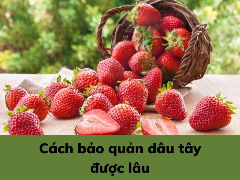 cach-bao-quan-dau-tay-duoc-lau