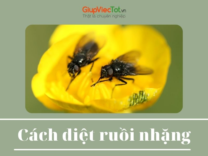 cach-diet-ruoi-nhang